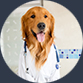 Dog Health And Care