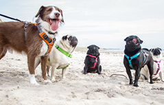 Top 50 Best Dog Training Tips