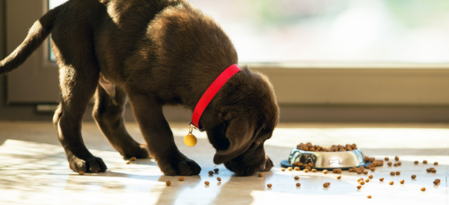 The Definitive Best Dog Food Guide