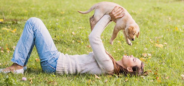 Golden Retriever Dog Health Problems And Lifespan