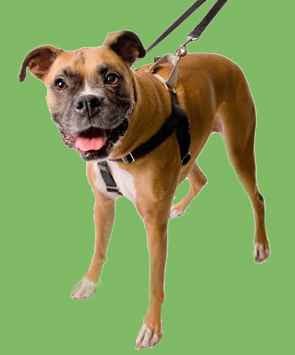 Wiggles Wags Whiskers Freedom Dog Training Harness
